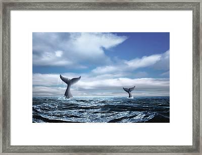 Whale Of A Tail Framed Print by Tom Mc Nemar