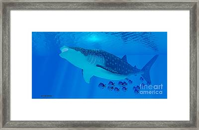 Whale Shark Feeding Framed Print by Corey Ford