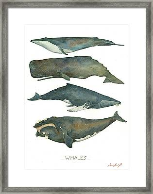 Whales Poster Framed Print by Juan Bosco