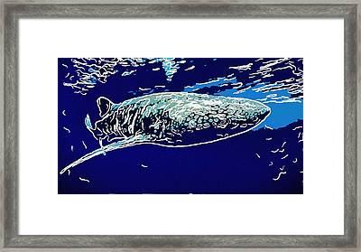 Whaleshark  Framed Print by Lanjee Chee