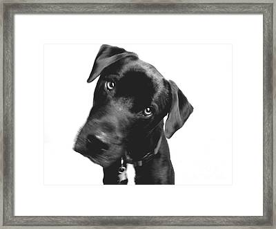 What Framed Print by Amanda Barcon