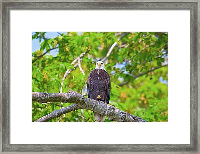 What Are You Looking At Framed Print by Naman Imagery