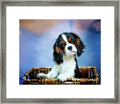 What Framed Print by Patricia Stalter