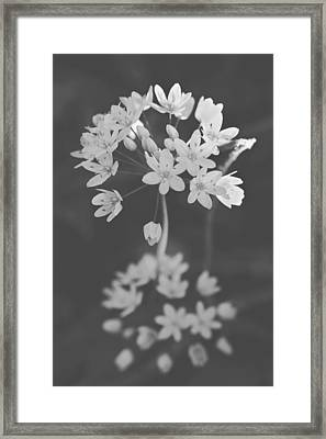 What The Heart Wants Framed Print by Laurie Search