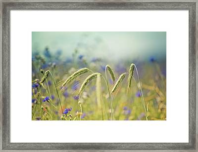 Wheat And Corn Flowers Framed Print by Nailia Schwarz