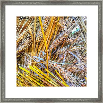 Wheat Framed Print by Jame Hayes