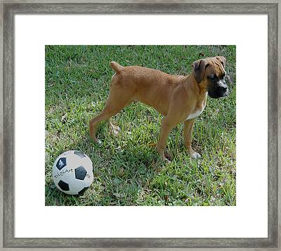 When I Was Just A Pup Framed Print by DigiArt Diaries by Vicky B Fuller