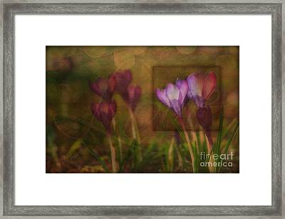 When The Light Paints The Flowers Framed Print by Joy Gerow