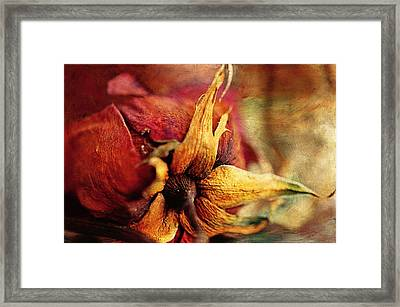 When The Rose Is Faded Framed Print by Maria Angelica Maira