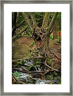 Where The Ents Are Framed Print by Angel  Tarantella
