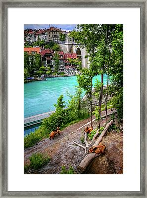 Where's Goldilocks? Bern Switzerland  Framed Print by Carol Japp