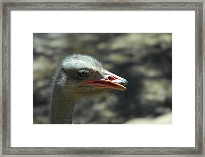 Where's The Sand Framed Print by Donna Blackhall