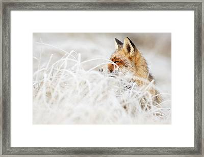 Which Fox....where? Framed Print by Roeselien Raimond