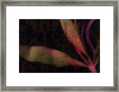 While The Flowers Slept Framed Print by Bonnie Bruno