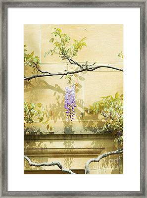 Whispering Wisteria Framed Print by Tim Gainey