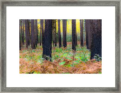 Whispering Woods Framed Print by Mary Amerman