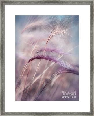 Whispers In The Wind Framed Print by Priska Wettstein