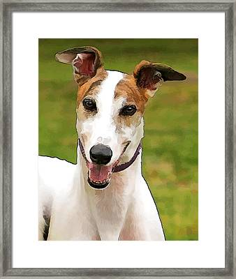 White And Tan Greyhound Framed Print by Elaine Plesser