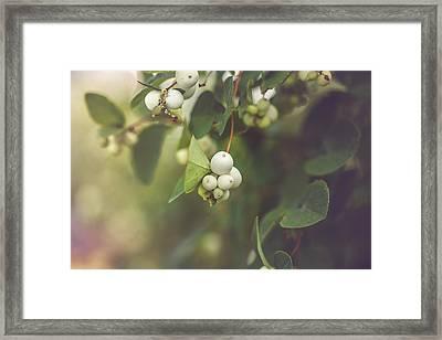 White Berries Framed Print by Cindy Grundsten