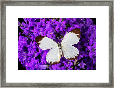 White Butterfly On Campanula Framed Print by Garry Gay
