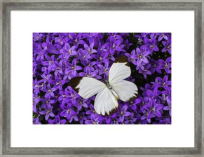 White Butterfly On Campanula Get Mee Framed Print by Garry Gay