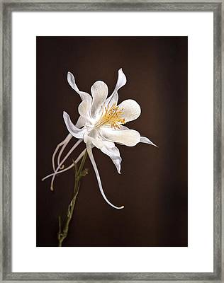 White Columbine Framed Print by James Steele