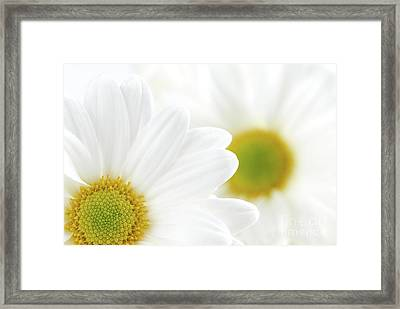 White Daisies Framed Print by Elena Elisseeva