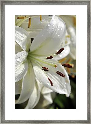 White Day Lily I 2008 Framed Print by Frank LaFerriere