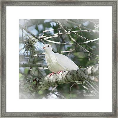 White Dove Messenger Framed Print by Ella Kaye Dickey