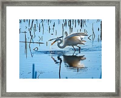 White Egret At Horicon Marsh Wisconsin Framed Print by Steve Gadomski