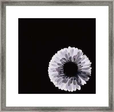 White Flower Framed Print by Graeme Harris