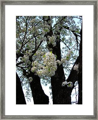 White Flowers - 44 Framed Print by Donovan Hubbard