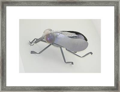 White Fly Framed Print by Michael Jude Russo