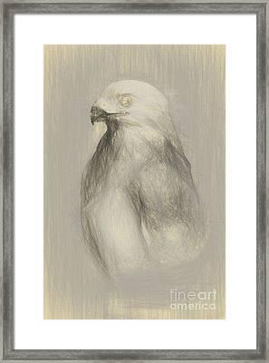 White Goshawk Artwork Framed Print by Jorgo Photography - Wall Art Gallery