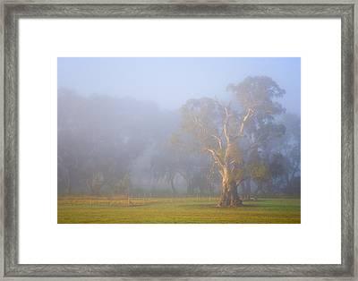 White Gum Morning Framed Print by Mike  Dawson