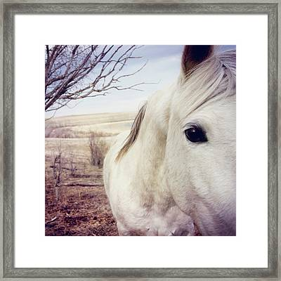 White Horse Close Up Framed Print by Lori Andrews