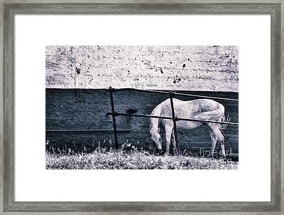 White Horse Framed Print by Silvia Ganora