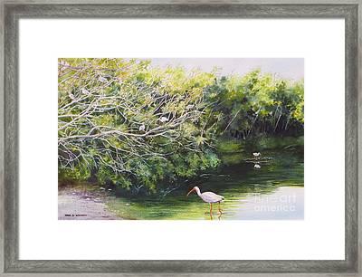 White Ibis Haven Framed Print by Karol Wyckoff