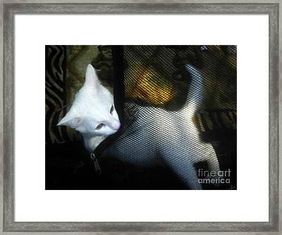 White Kitten Framed Print by David Lee Thompson