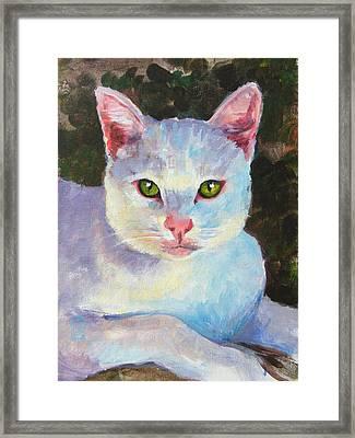 White Kitty Framed Print by Debra Jones