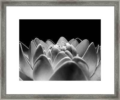 White Lotus In Night Framed Print by Sumit Mehndiratta
