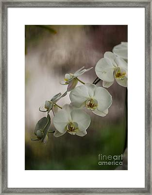 White Of The Evening Framed Print by Mike Reid