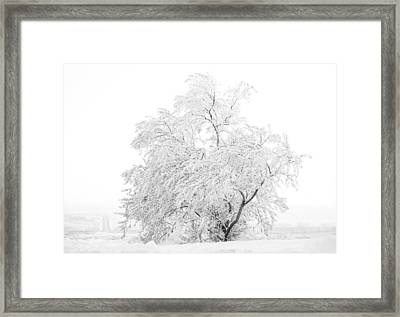 White On White Framed Print by Marilyn Hunt