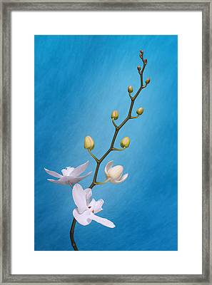 White Orchid Buds On Blue Framed Print by Tom Mc Nemar