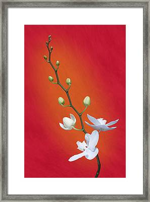 White Orchid Buds On Red Framed Print by Tom Mc Nemar