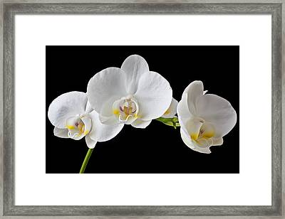 White Orchid Framed Print by Garry Gay