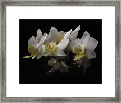 White Orchids Framed Print by Eduard Moldoveanu