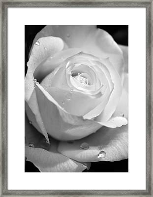 White Rose Framed Print by Brian Roscorla