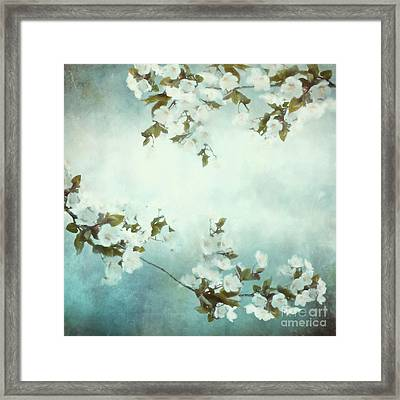 White Sakura Blossoms Framed Print by Shanina Conway