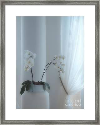 White Series Soft Framed Print by Joyce Hutchinson